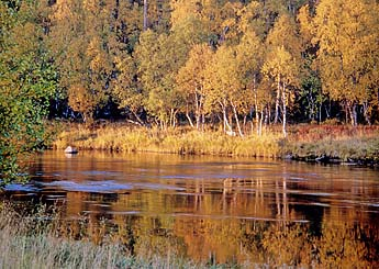 Nuorttijoki in the Autumn. Photo: Sulo Norberg