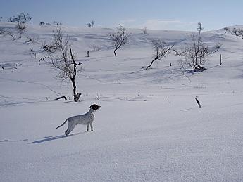 Koira Kaldoaivin erämaassa. Kuva: Teppo Sirkiä, Vastavalo.fi