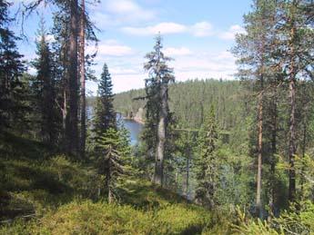 Hossassa on harjuja ja vesistöjä. Kuva: Sirke Seppänen / Metsähallitus
