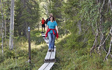 Tre vandrare går längs spänger mot fotografen. Spängerna leder genom en tät skog.