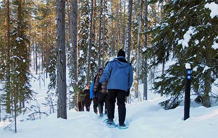 Hiiden hurmos är en av Oulankas snöskoleder. Bild: Susanna Kolehmainen/Forststyrelsen