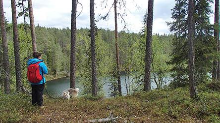 Kanjonin kurkkaus (Oulanka kanjons vandringsled). Bild: Susanna Kolehmainen