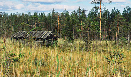 Along the Rytisuo Nature Trail, you will see a wide variety of plants, former trap structures and mire meadows. Photo: Hannu Hautala
