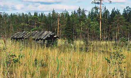 Längs Rytisuo naturstig finns rikligt med växter, fällkonstruktioner från förr i tiden och kärrängar Bild: Hannu Hautala