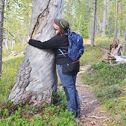 Keroharju-leden går över åsar och tallmoar. Bild: Juho Määttä/Forststyrelsen