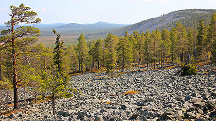 The scenery from Yli-Luosto. Image: Juha Paso