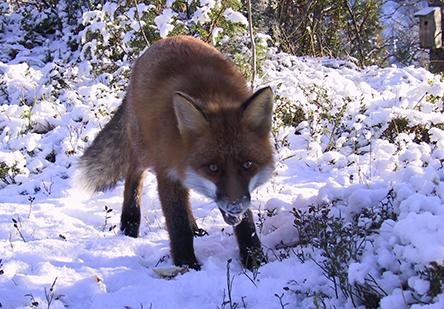 Photo: Eeva Magga, Metsähallitus