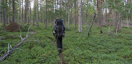 Nuortti Hiking Trail. Photo: Kirsi Luonuankoski, Metsähallitus