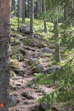 Kulhanvuoren polut ovat osittain jyrkkiä. Kuva: Riikka Mansikkaviita.