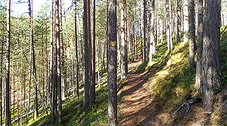 Hiking Trails in Hossa - Nationalparks.fi fb9b692aae