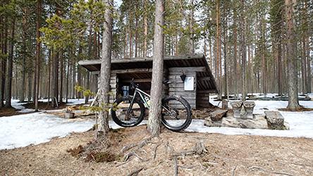 Велосипед стоит присланенный к сосне перед навесом. Хоть и весна, но в лесу все еще лежит снег.
