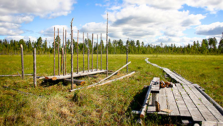 Old hay drying contructions on Kivalonaapa Meadow Culture Trail. Image: Juha Paso