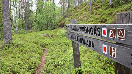 From Könkäänvaara Trail. Image: Juha Paso