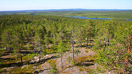 Views from Vaattunkivaara hill. Image: Juha Paso
