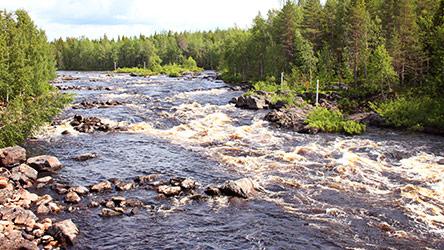 Vikaköngäs rapids. Image: Juha Paso