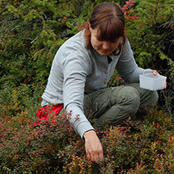 You can pick berries when hiking along the Salojen siivekkäät Nature Trail. Photo: Saara Airaksinen