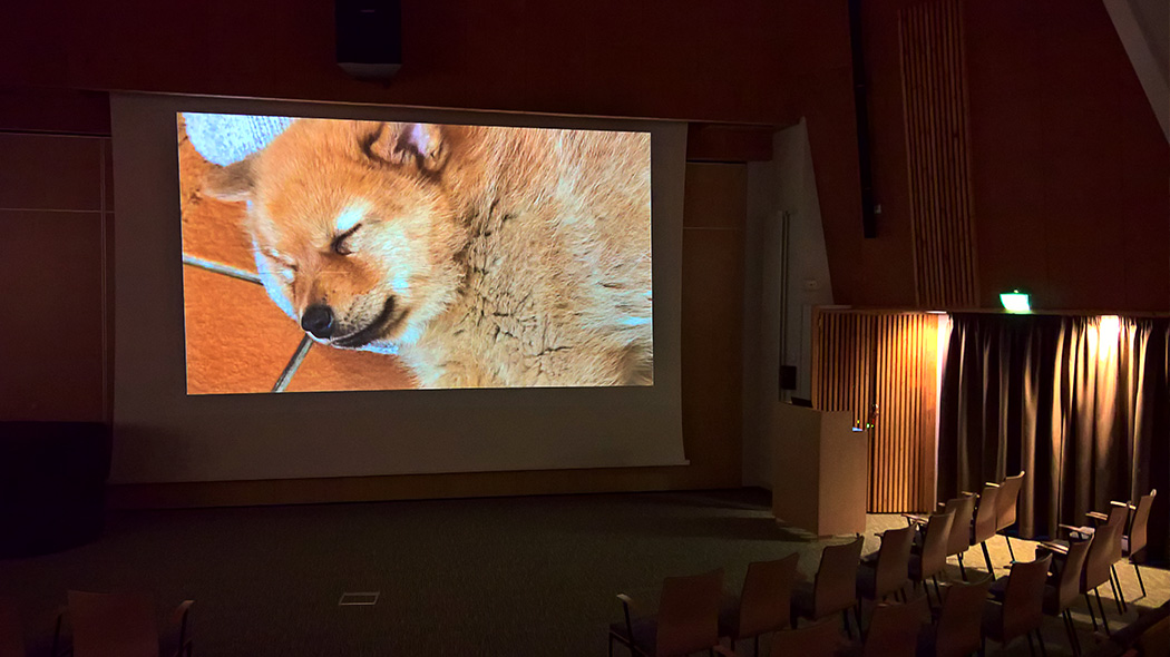 "The video show ""Finnish Spitz's Dream"" in Naava auditorium. Image: Anna Pakkanen"