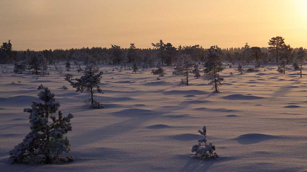 Kauhanevan-Pohjankankaan kansallispuisto - Luontoon.fi 878f5bb868