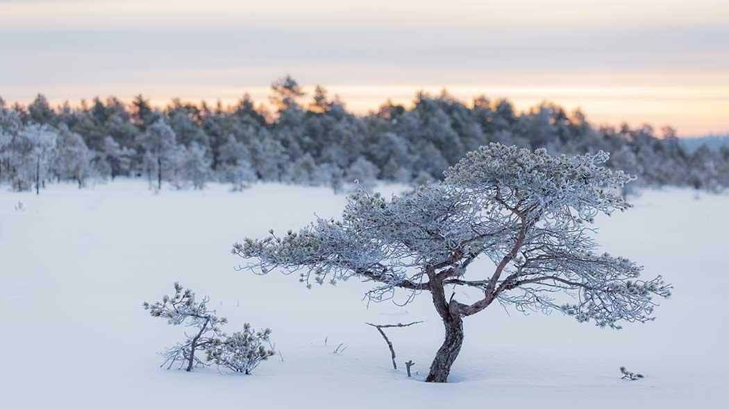 Torronsuon kansallispuisto - Luontoon.fi 05c8074851