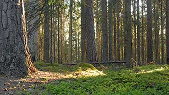 Old-growth forest of Multiharu. Photo: Terttu Hermansson