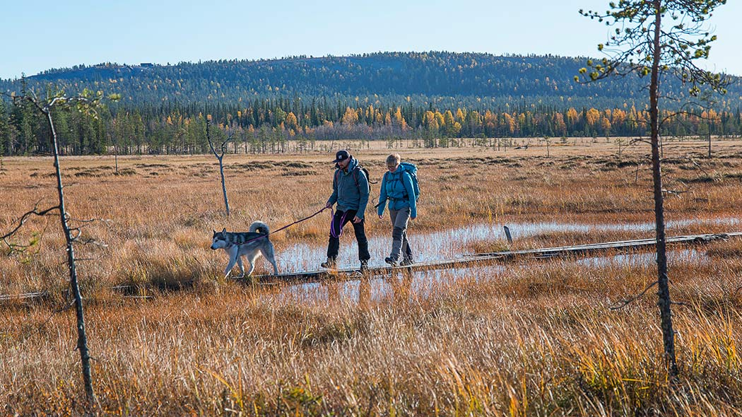 The dogs must be on a leash when moving in Pyhä-Luosto National Park. Image: Teemu Kuisma