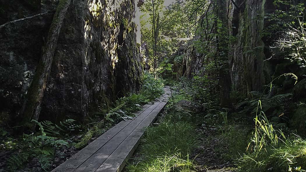 Naturstig med spångar på öns skogsområde.