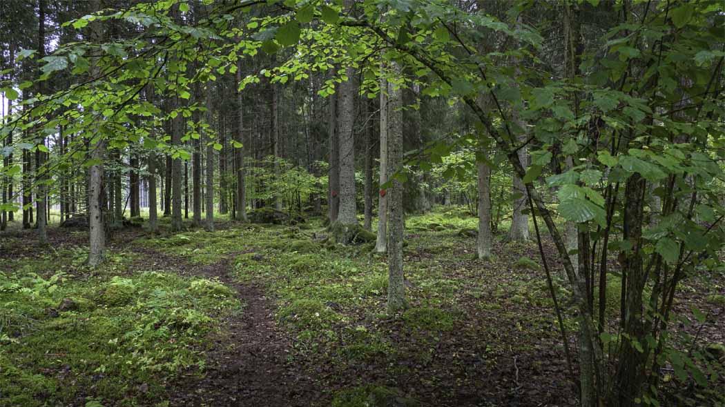 En sommarskog med naturstig.