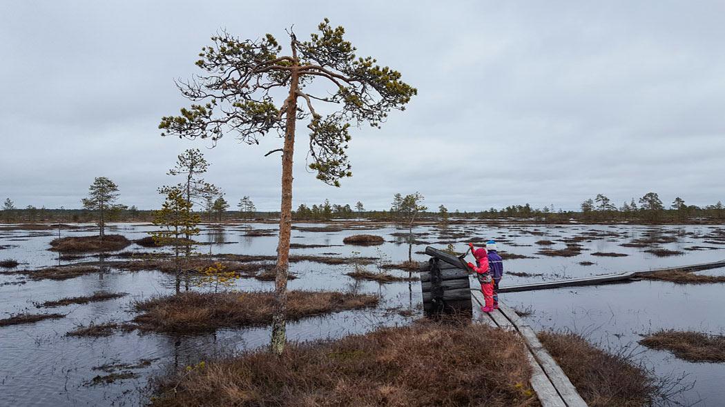 Lapset retkellä Hirvisuolla. Kuva  Hannele Kytö a893070d1c