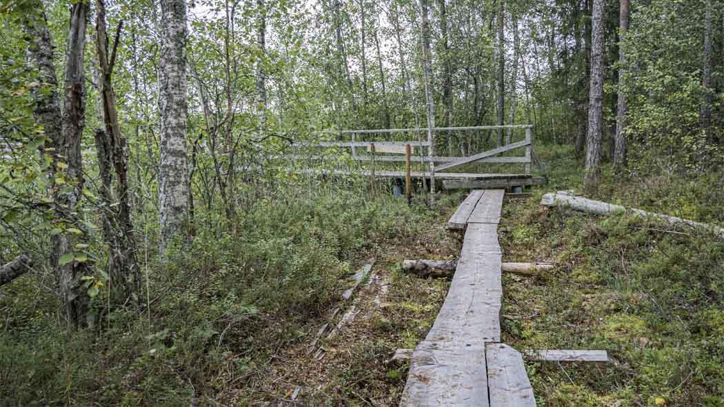 Spångar i skogen som leder till en träbro.