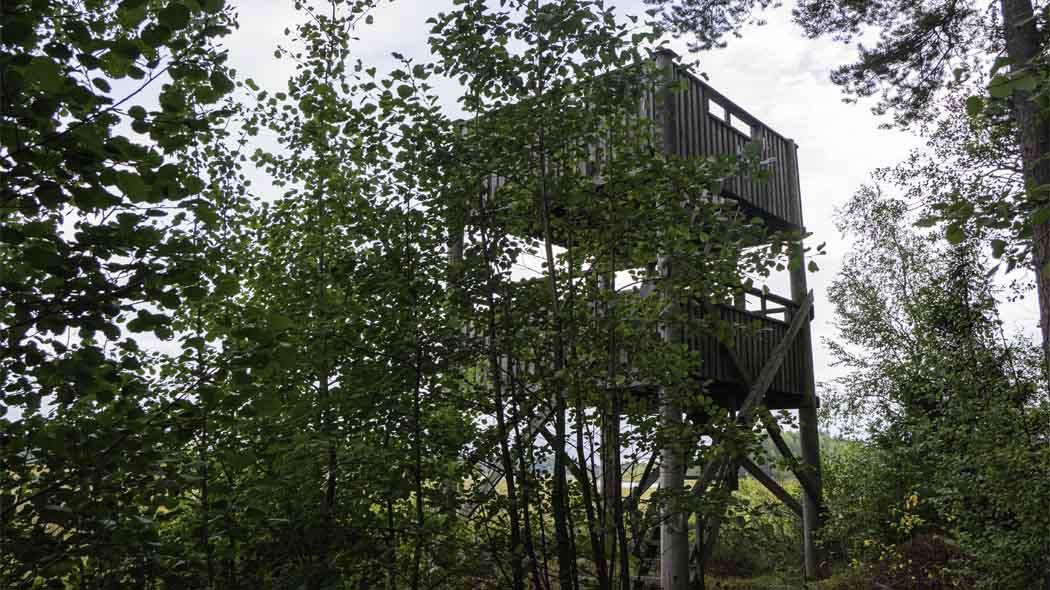 Träd i förgrunden och i bakgrunden skymtar fågeltornet.