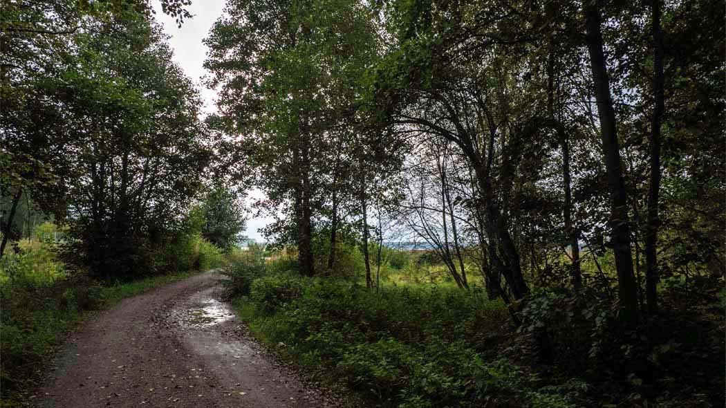 En stig leder via skogen till en utkiksplattform med vyer över sjön.
