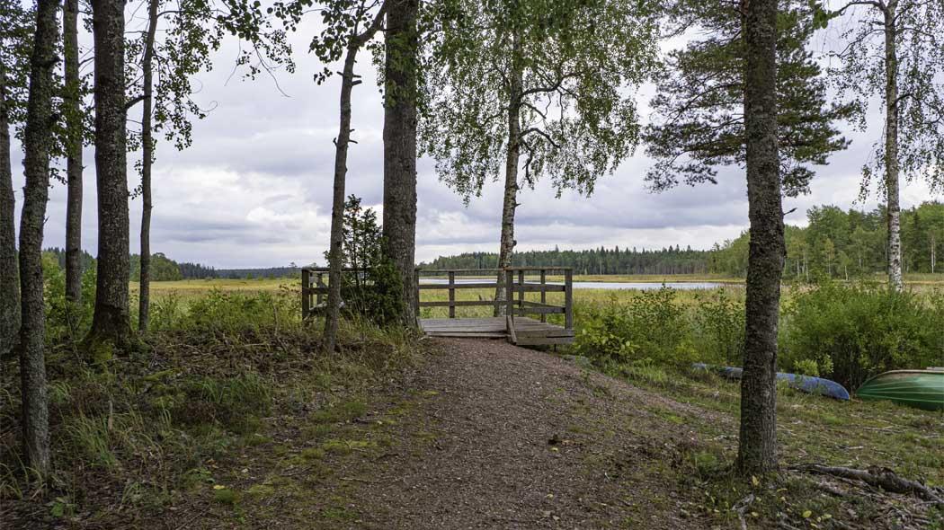 Utsiktsplats med vy över den vassbevuxna delen av sjön.