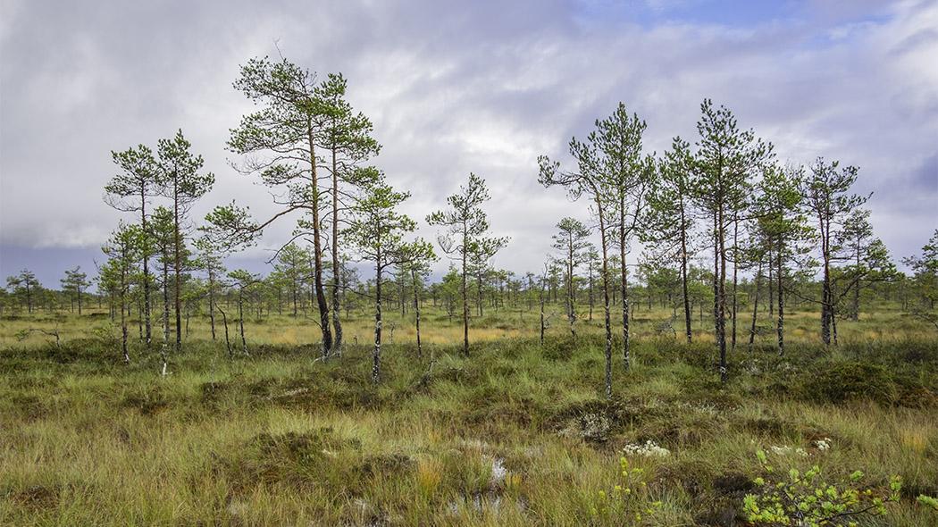 Levanevan luonnonsuojelualue - Luontoon.fi 9519bf3c3c