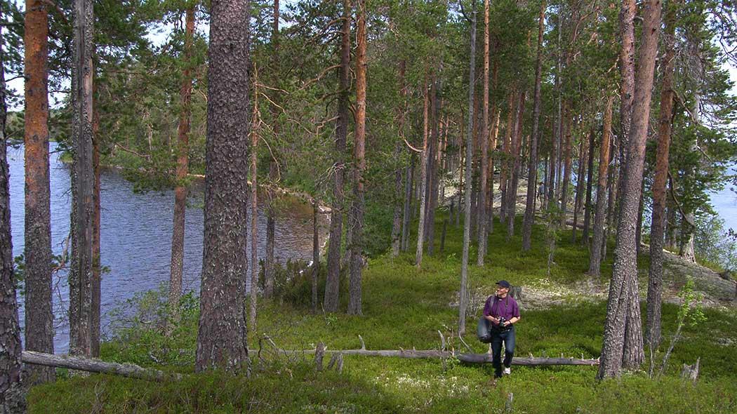 release date: 32753 c77db Mujejärvi. Kuva  Reino Turunen
