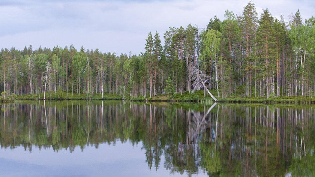 Saarijärven luonnonsuojelualue - Luontoon.fi 770df342c1