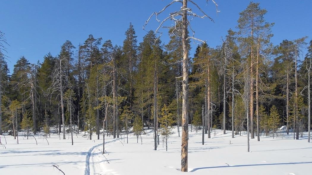 Teerisuo - Lososuo soidensuojelualue - Luontoon.fi d20d591bef