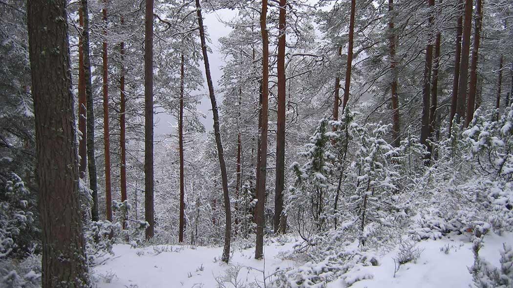 Vaarunvuori talvimaisemassa. Kuva  Maija Mikkola 017ce7d5cd