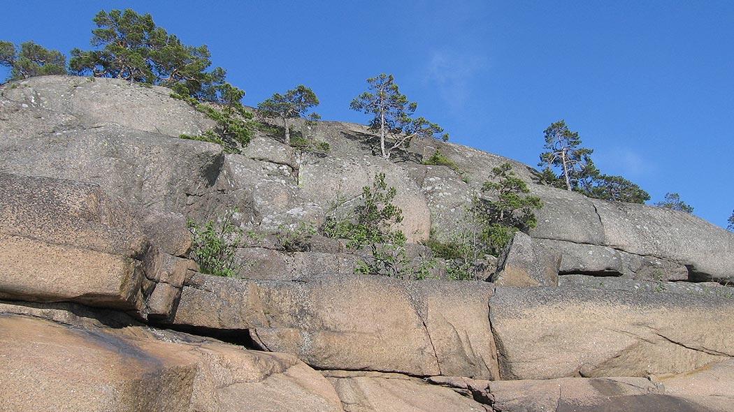 En hög och slät klippa en sommardag. I klippans skrevor växer låga tallar. I bakgrunden kan en molnfri himmel ses.