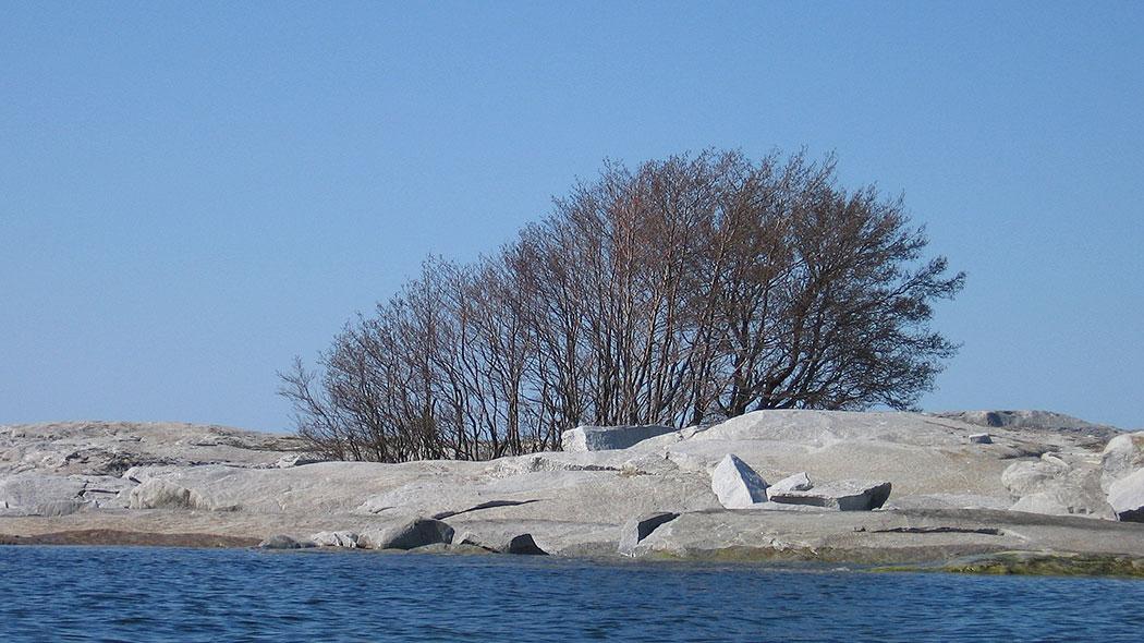 En liten holme med släta klippor i havet. På klipporna växer små lövfria träd.
