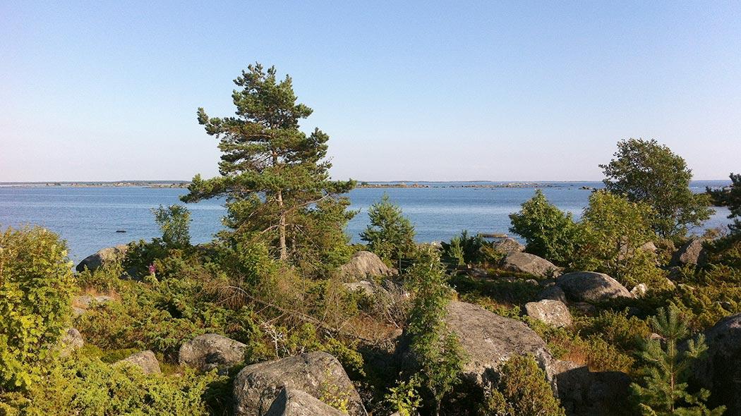 En somrig havsstrand. I stranden finns stora stenar och låg växtlighet. En låg tall växer i stranden.