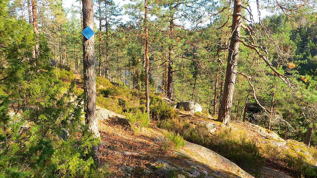 The trails at Haukankierros Circular Trail are marked in blue. Photo: Laura Lehtonen.