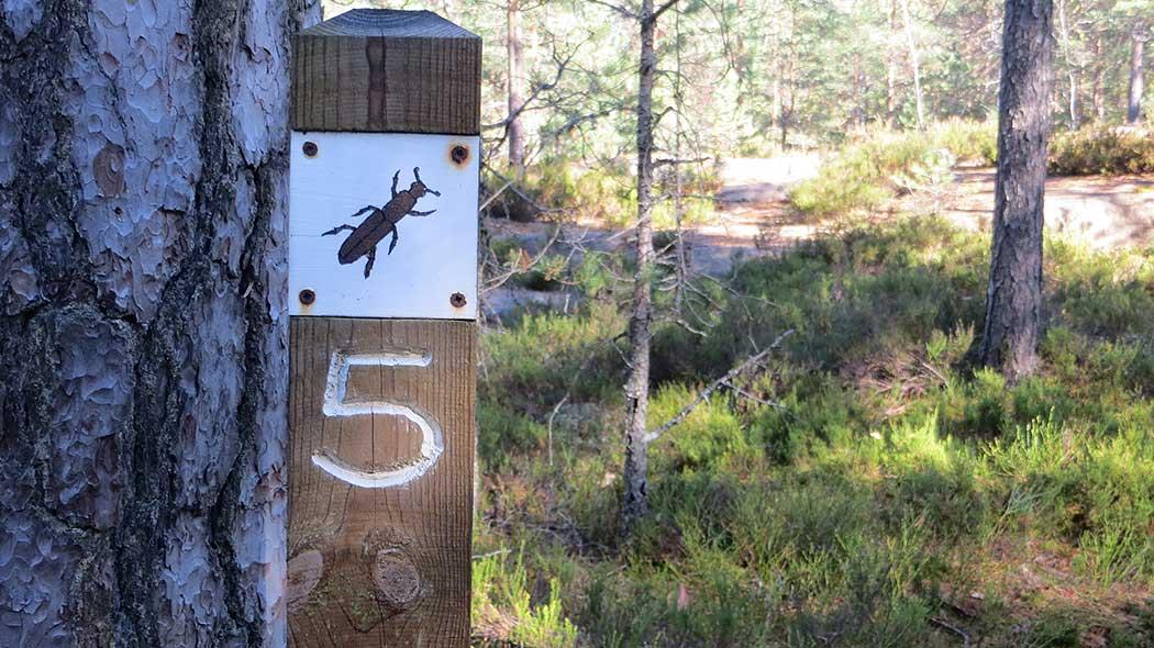 Kaarniaispolku Nature Trail. Photo: Laura Lehtonen.