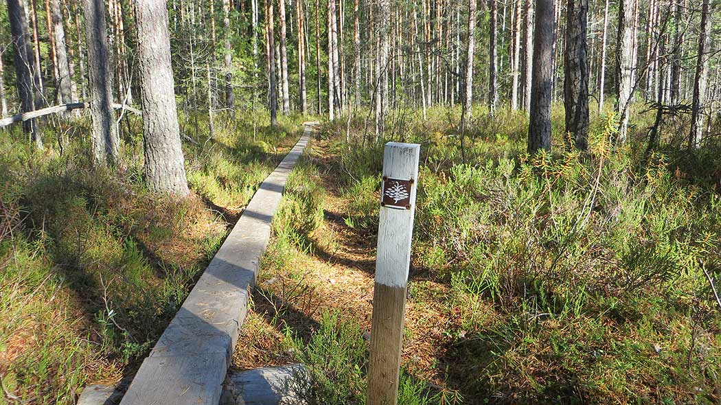 Kaarniaispolku Nature Trail is marked with brown cone signs. Photo: Laura Lehtonen.