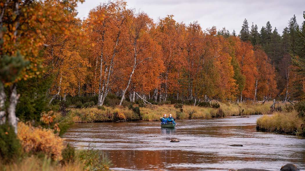 Två människor paddlar på älven, i lövträden vid åstranden syns höstens färger.
